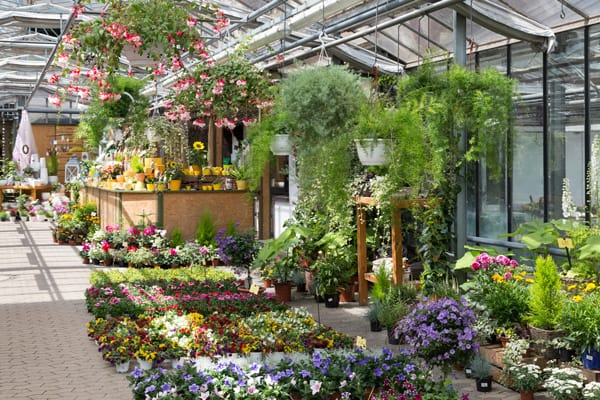 Marché des jardineries : le temps de la consolidation