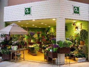 franchise-oya fleurs-galerie