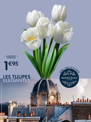 monceau fleurs – 9janv2020 – 1