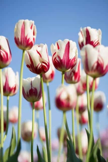 monceau fleurs – 9janv2020 – 2